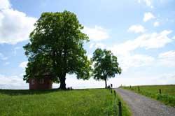 """Die """"Rote Kapelle"""" am Lindchen"""