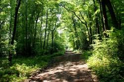 Der Pilgerweg bei Abbenroth