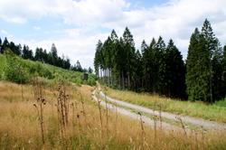 Der Wacholderweg