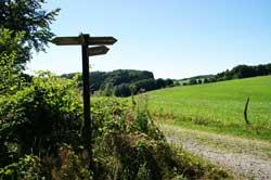 Wegezeiger oberhalb der Ruine Neuenberg