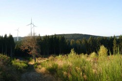 Waldpfad hinab zur Albaumer Höhe