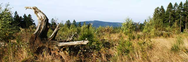 Blick über den Wimberg auf den Silberg