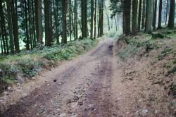 Hohlweg bei Forste an der Grenze zu Westfalen