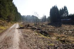 Das Naturschutzgebiet Dollenbruch im Süden von Silberg