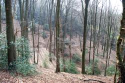 Pilgerweg zwischen Kirschbaum und Schiefenthal