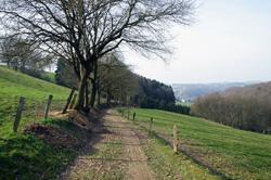 Pilgerweg unterhalb von Schiefenthal