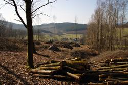 Hauberg oberhalb von Ruckersfeld