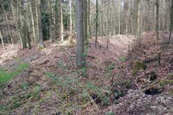 Hohlwegbündel im Fröhninger Holz nach Bottenbach
