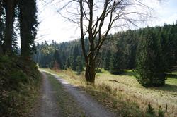Rothaarsteig entlang der Ederaue