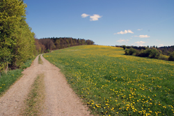 Der Sauerland-Höhenweg oberhalb von Burg Wildenburg
