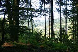 Blick vom Hang des Kerbtals hinunter nach Bröl