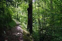 Schmaler Waldpfad am Hang des Ahrenbachtals