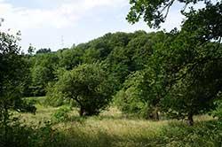 Verwilderte Obstbauwiese auf früherer Weinbaufläche im Ahrenbachtal