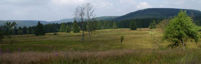 Der Neue Hagen, auch Niedersfelder Hochheide genannt