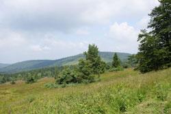 Blick über das NSG Neuer Hagen beim Clemensberg
