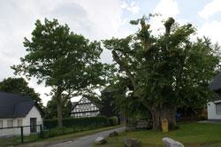 Die 500-jährige Linde in Küstelberg