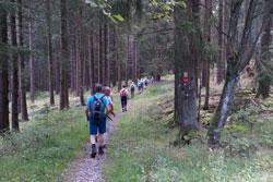 Rothaarsteig zwischen Benfe und Großenbach