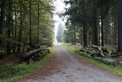 Die Kohlenstraße an der Ederquelle Richtung Wittgenstein
