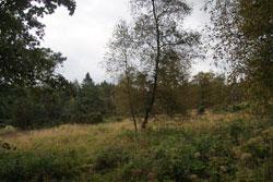 Heinsberger Hochheide mit Wacholderbüschen