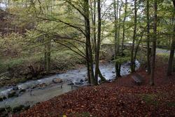 Der Aubach mit Brücke beim Wildweiberhäuschen