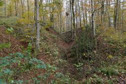 Reste der alten Landhecke am Müsener Schlag