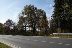 Die Vorspanneiche zwischen Brachthausen und Hilchenbach