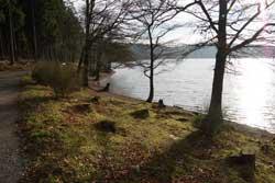 Nordost-Ufer der Bruchertalsperre