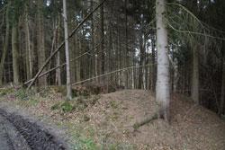 Reste der Burg Erberich
