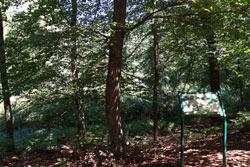 Der Kronenweiher ist natürlichen Ursprungs, wenn er auch auch als abgetorftes Moor durch den Menschen stark überprägt wurde