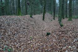 Teil der Alte Schanze in Hohenhain