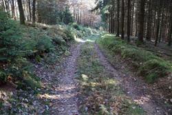 Hohlweg am Rothen Stein