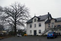 Stieleiche (Quercus robur) in Buchen