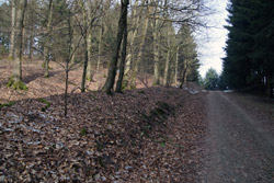 Alte Landhecke zwischen Ewiger Fuhrmann und Langebachsköpfe