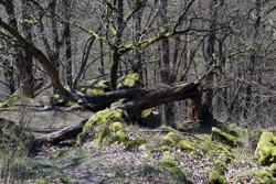 Naturdenkmal Teufelskanzel