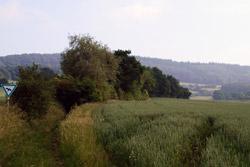 Uralter Hohlweg in Richtung Steinberg