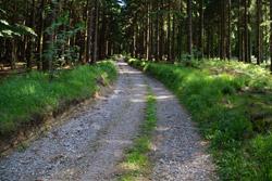 Der Hansaweg in Richtung Windelstein