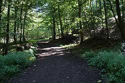 Alter Kirchweg zwischen Nammen und Lerbeck