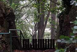 Wittekindsberg am Moltketurm