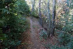 Waldpfad zur Alten Bückeburg