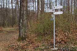 Wanderwegweiser am Rauheberg. Hier zweigt der Werra-Burgen-Steig Hessen (X5H) auf der Gemeindegrenze nach rechts ab zum Schloss Berlepsch