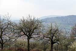 """Blick vom """"Werra-Burgen-Steig Hessen"""" auf die """"Kirschenstadt Witzenhausen"""""""