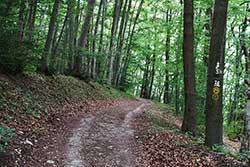 Der Werra-Burgen-Steig Hessen Richtung Weißer Graben parallel zur hessisch-thüringischen Grenze