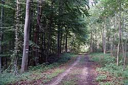 Barbarossaweg auf der Graburg