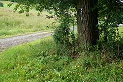 Grenzbaum mit Markierung
